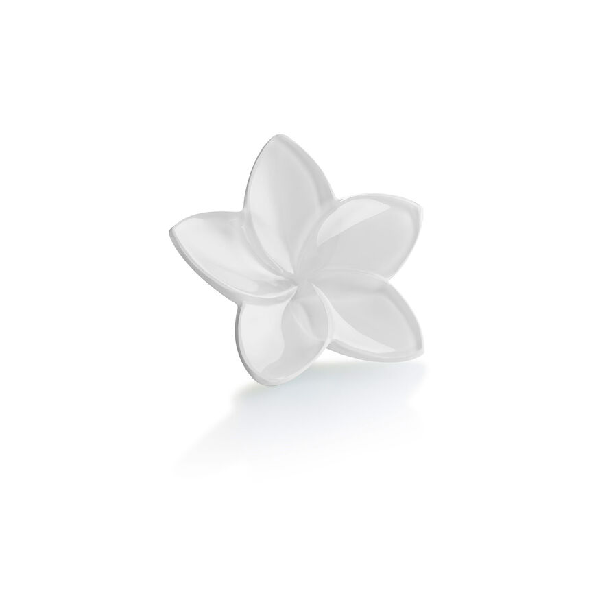 THE BLOOM COLLECTION, White